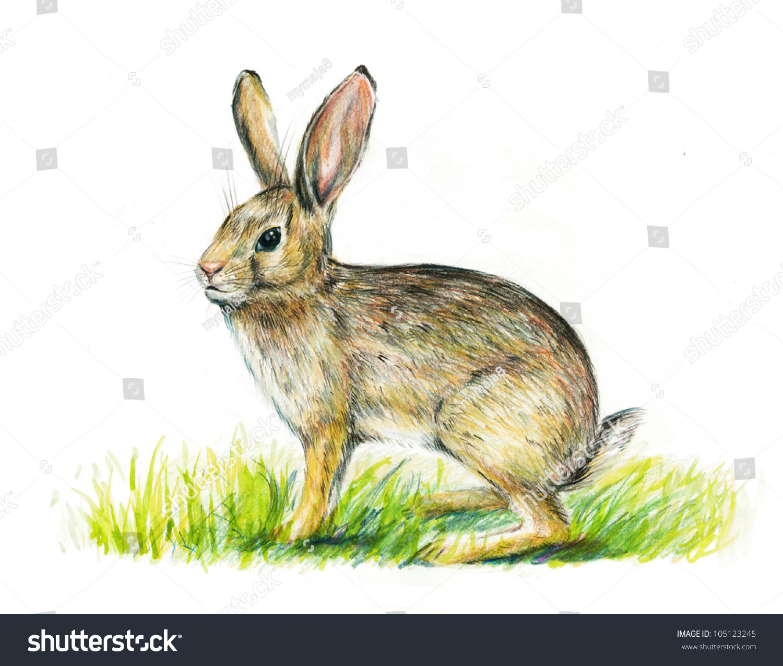 Realistic rabbit illustration - photo#11