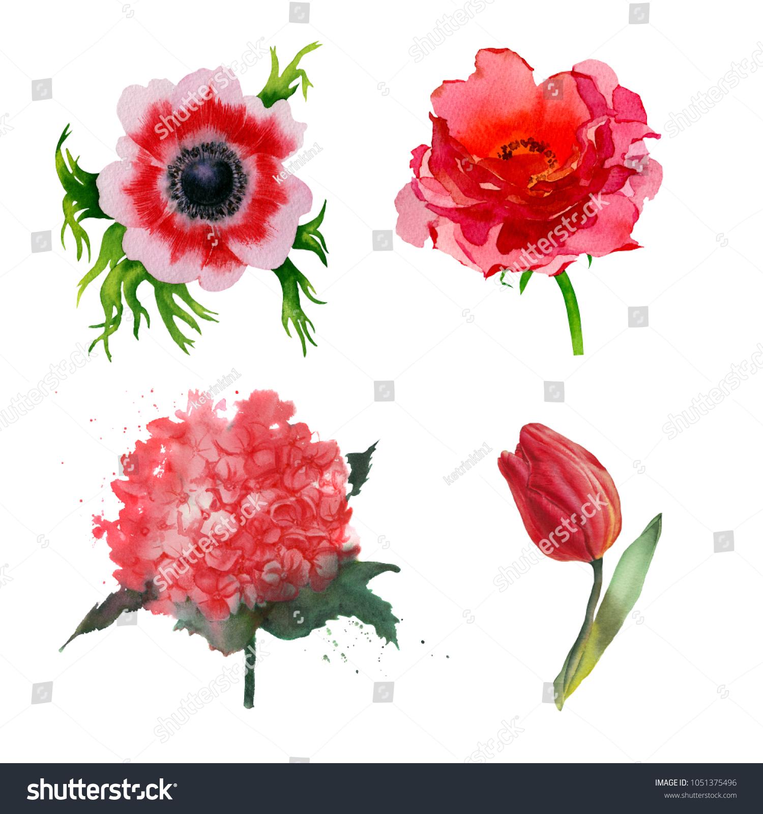Watercolor Botanical Illustration Tulip Hydrangea Rose Stock ...