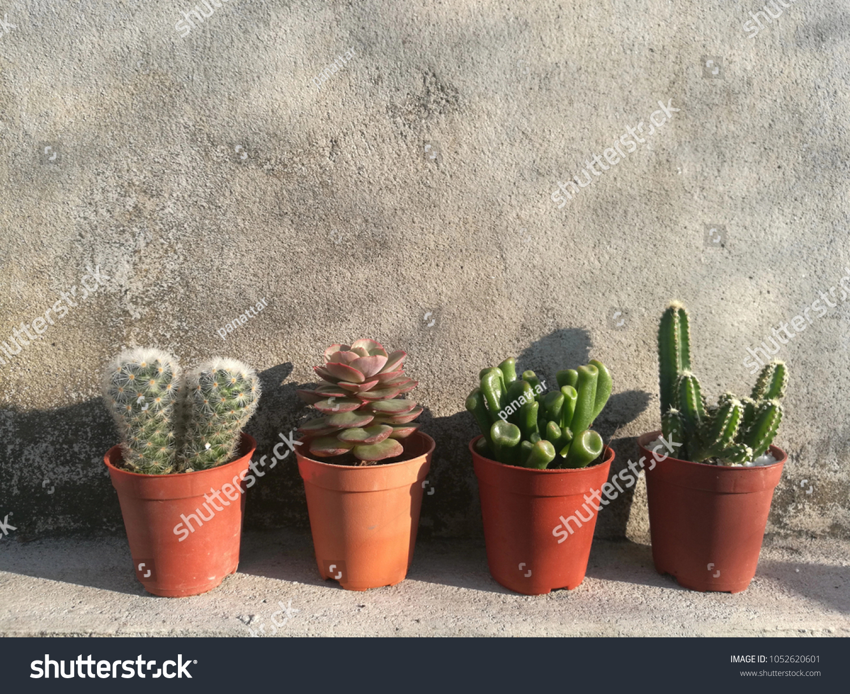 Mix Mini Pots Succulent Cactus Houseplants | Royalty-Free ... Id Succulent Houseplants on succulent bonsai, succulent care, succulent seeds, succulent gardening, succulent planting, succulent shrubs, succulent soil, succulent cactus, succulent photography, succulent design, succulent cuttings, succulent perennials, succulent terrarium idea, succulent garden, succulent pottery, succulent toxicity to dogs, succulent plants, succulent flowers, succulent greenhouses, succulent planters,
