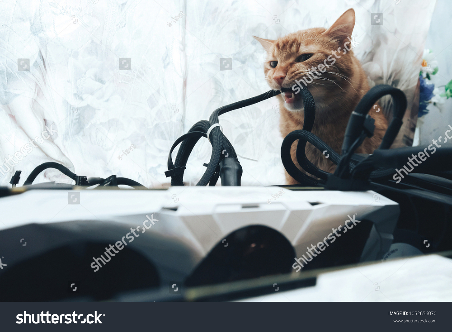 Ginger Cat Tries Bite Wires On Stock Photo (Edit Now) 1052656070 ...