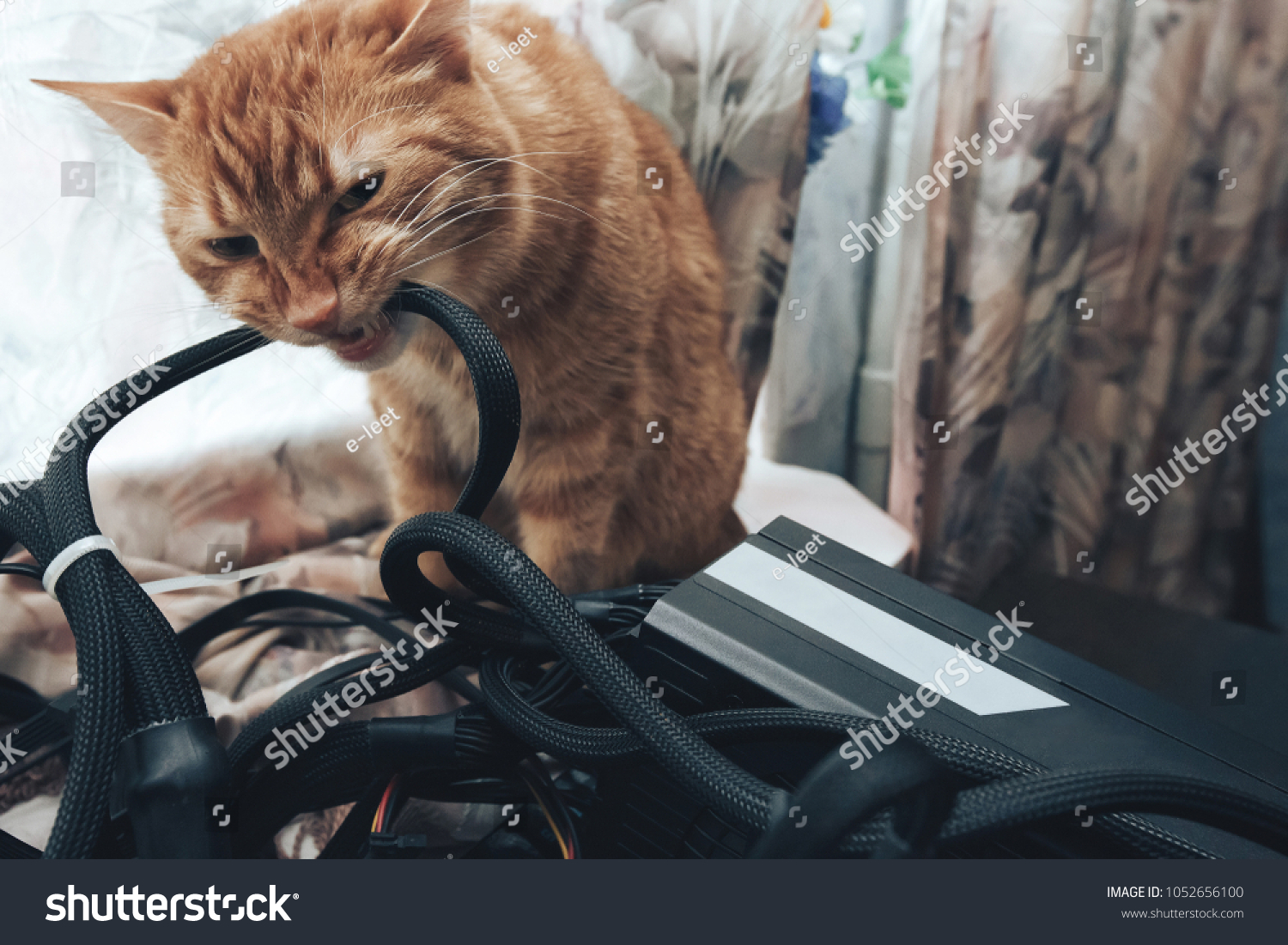 Ginger Cat Tries Bite Wires On Stock Photo (Edit Now) 1052656100 ...