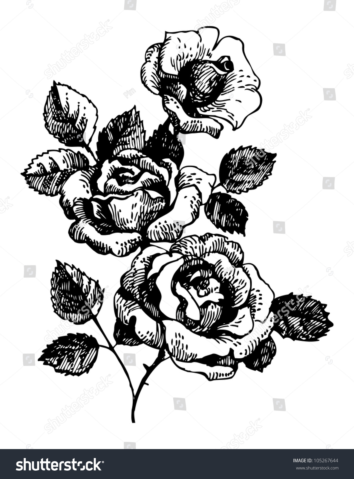 Roses Handdrawn Illustration Bouquet Rose Flowers Stock