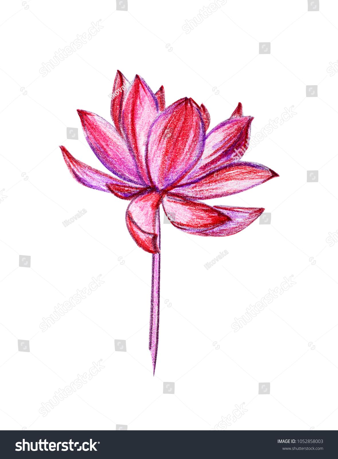 Illustration exotic flower drawing pink lotus stock illustration illustration of an exotic flower drawing of a pink lotus with colored pencils watercolor izmirmasajfo