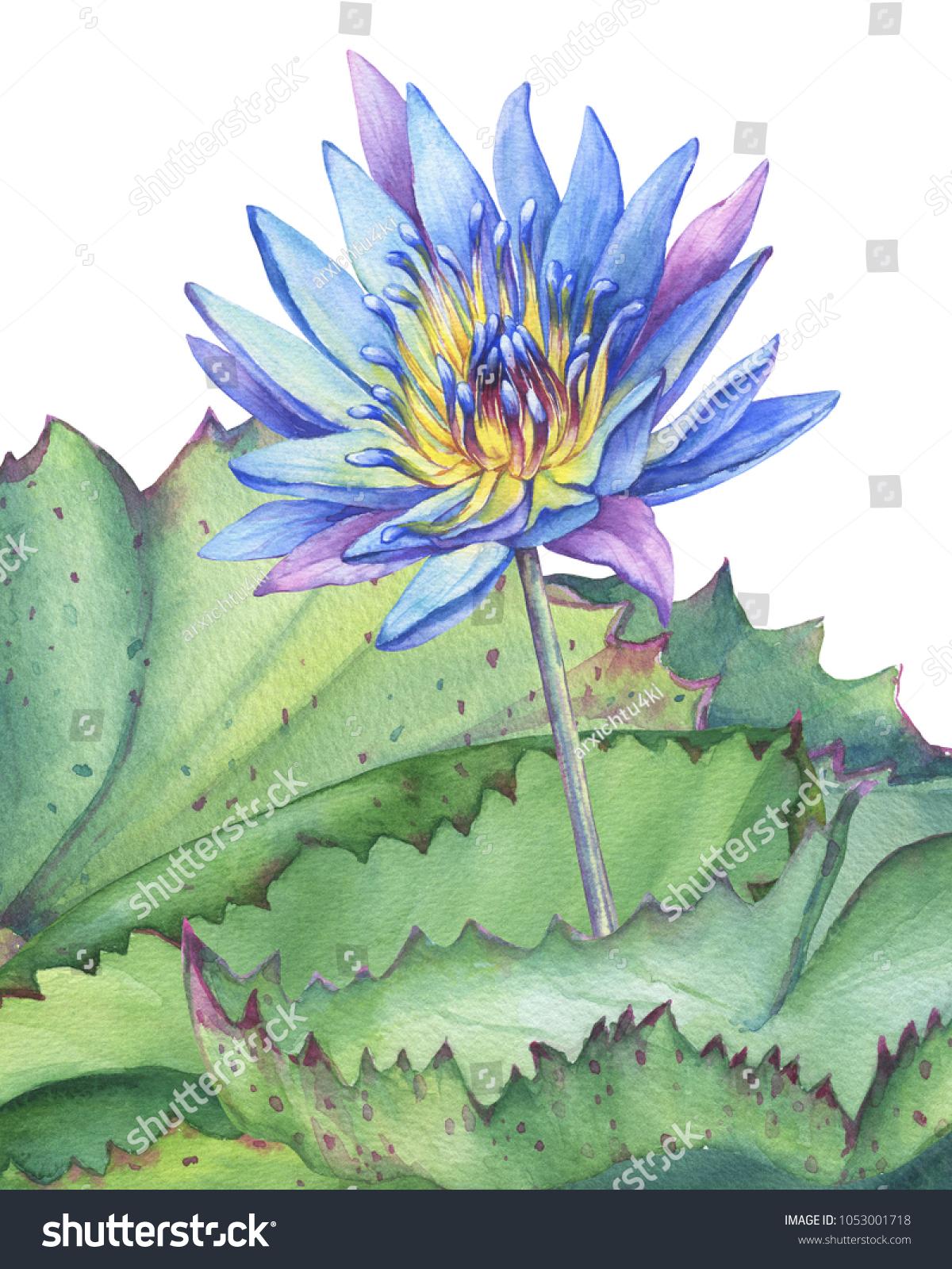 Greeting Card Blue Lotus Flower Leaves Stock Illustration 1053001718
