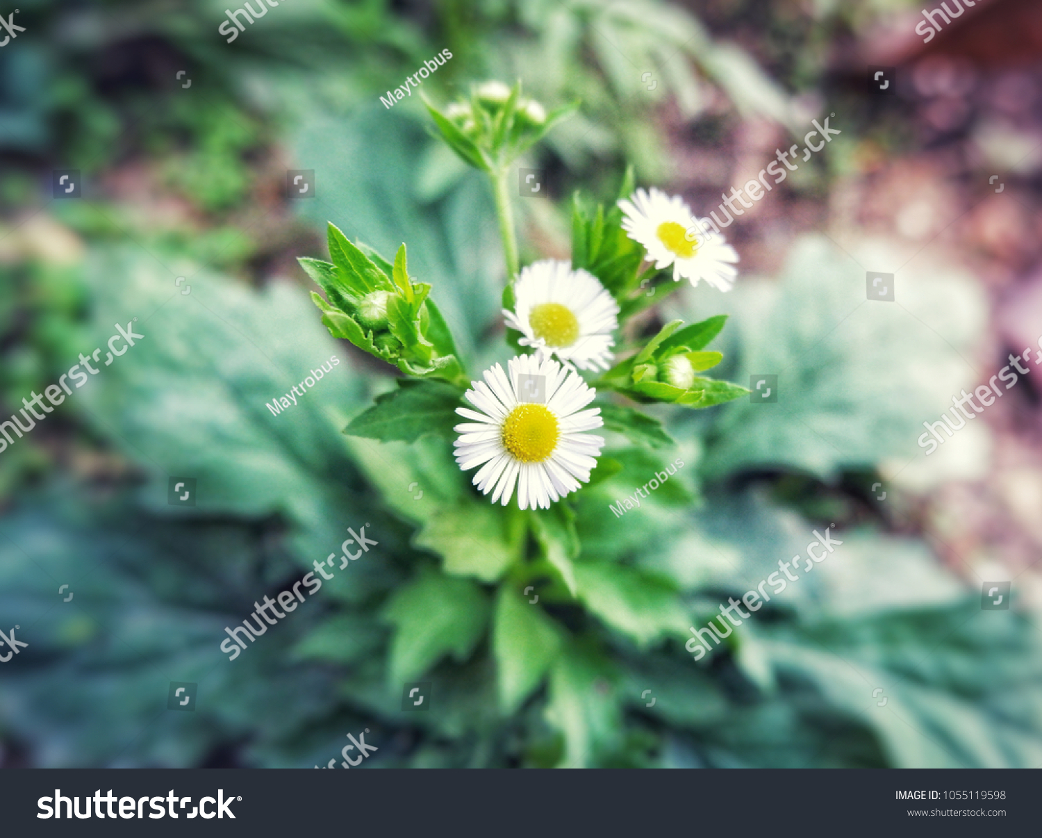 White Cutter Flowers Garden Meaning That Flower Stock Photo Edit