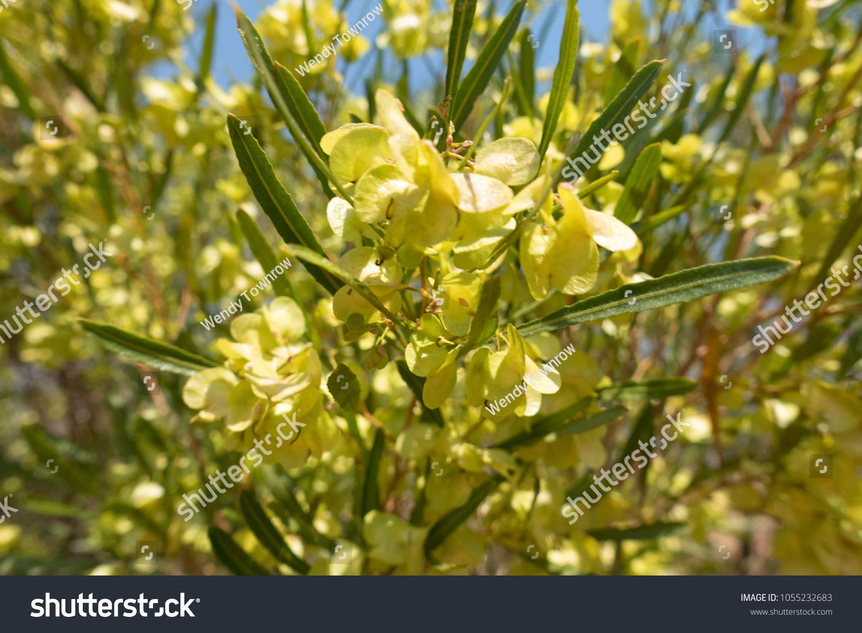 Yellow flowers near alice springs outback stock photo royalty free yellow flowers near alice springs outback stock photo royalty free 1055232683 shutterstock mightylinksfo