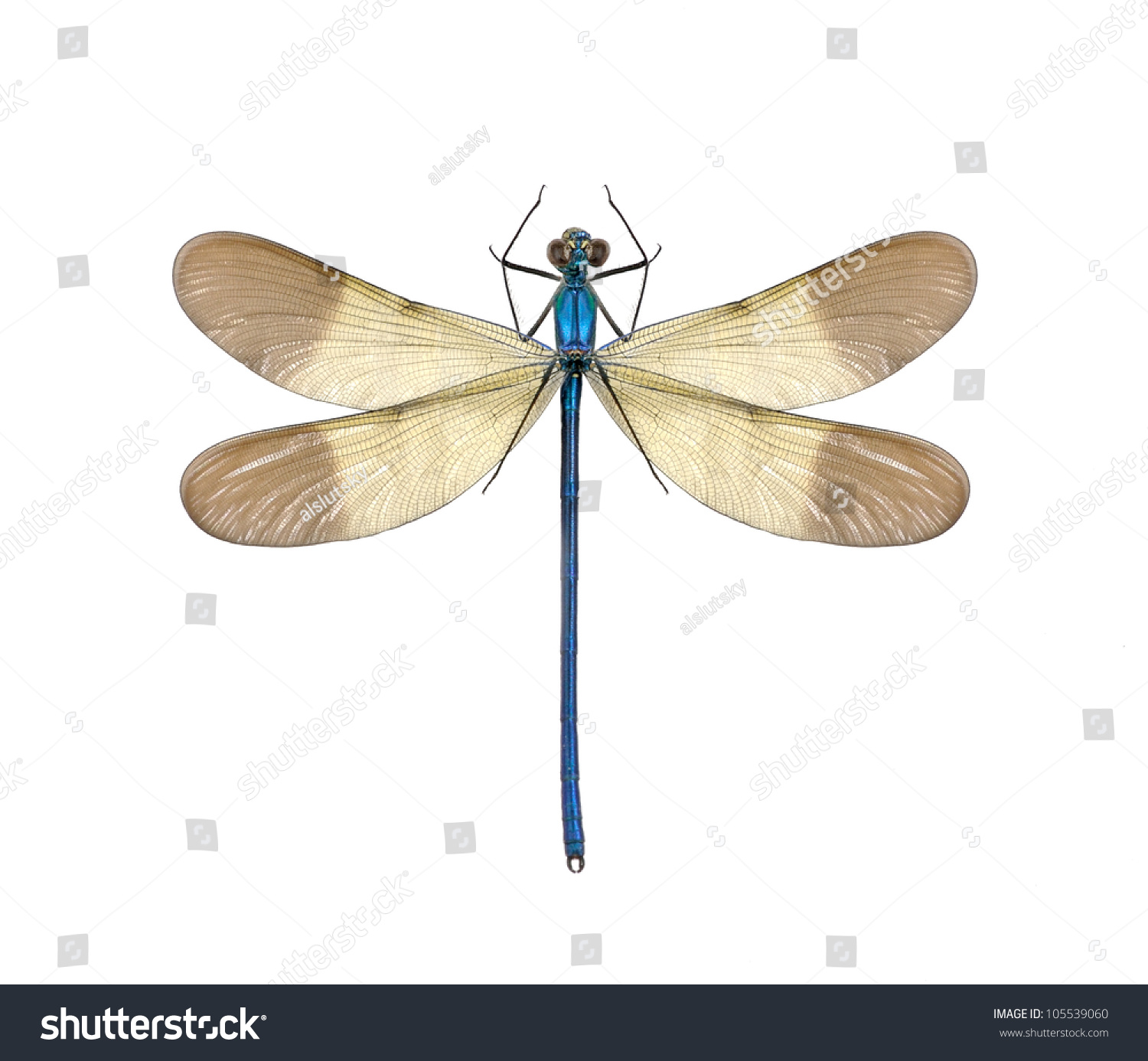 dragonfly calopteryx syriaca male on white stock photo 105539060