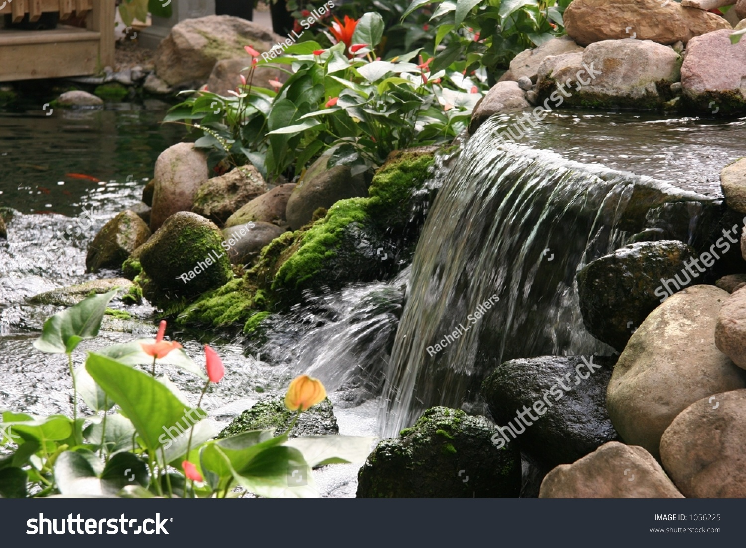 Tropical Indoor Water Garden Stock Photo 1056225 Shutterstock