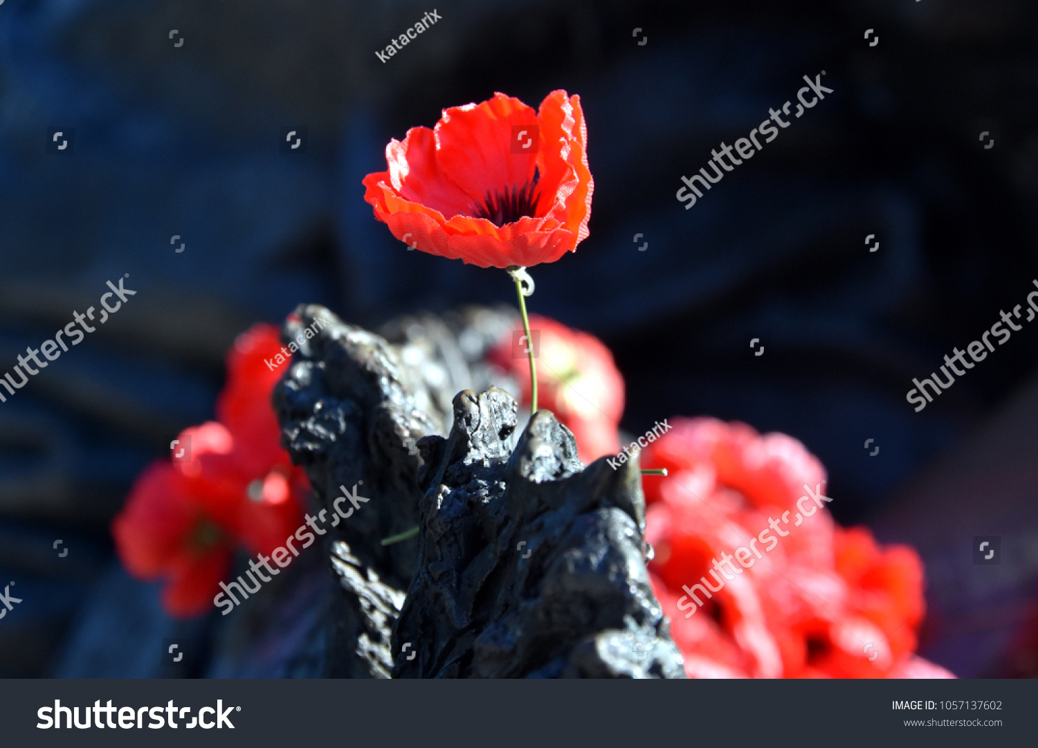 Poppies on rock australian war memorial stock photo 1057137602 poppies on a rock at the australian war memorial in canberra the red poppy has buycottarizona Images