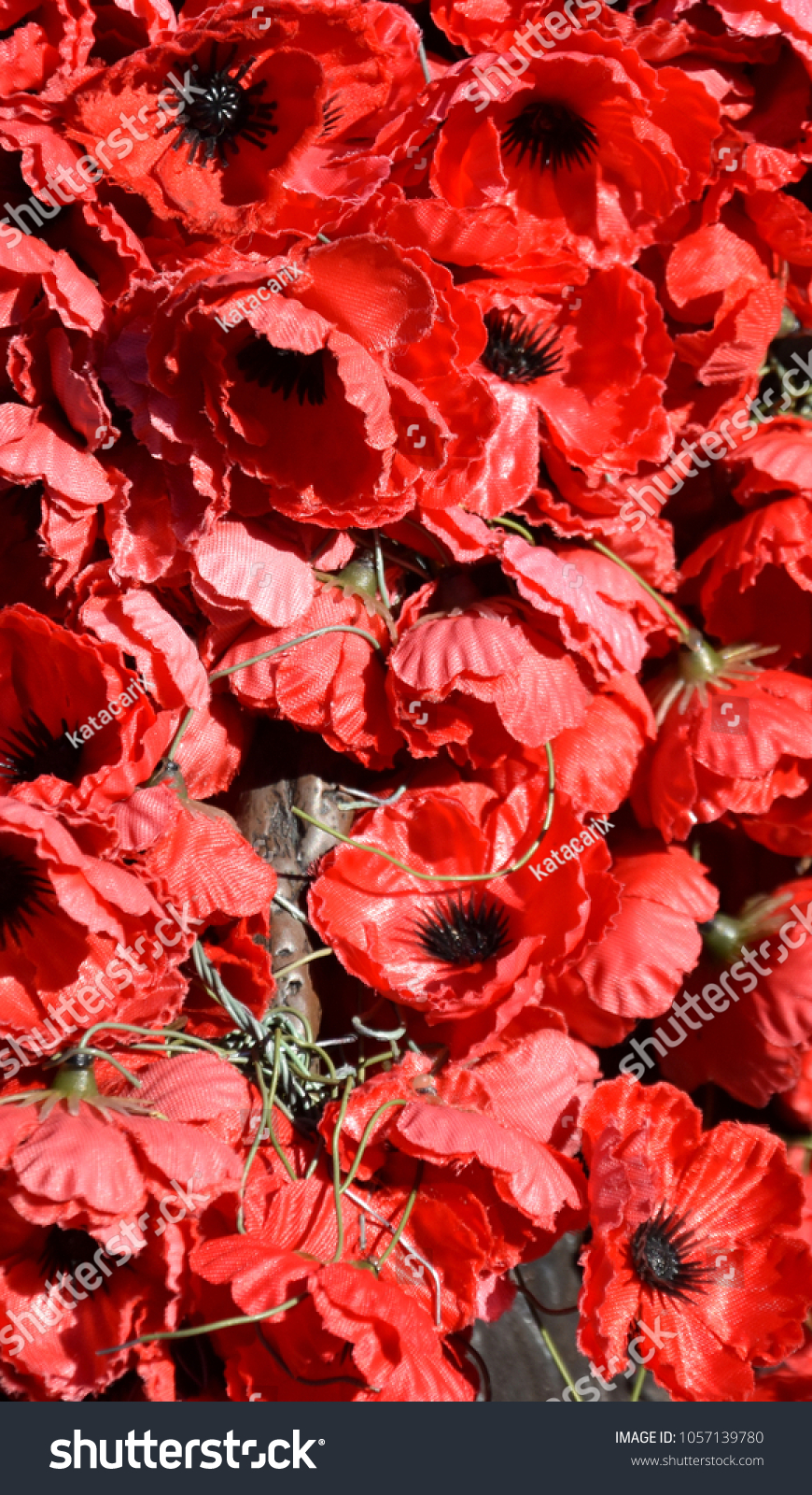 Plastic red poppies red poppy has stock photo 1057139780 plastic red poppies the red poppy has become a symbol of war remembrance anzac buycottarizona Images