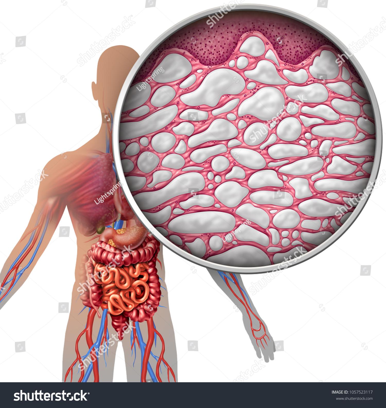 Interstitium Human Body Anatomy Organs Concept Stockillustration