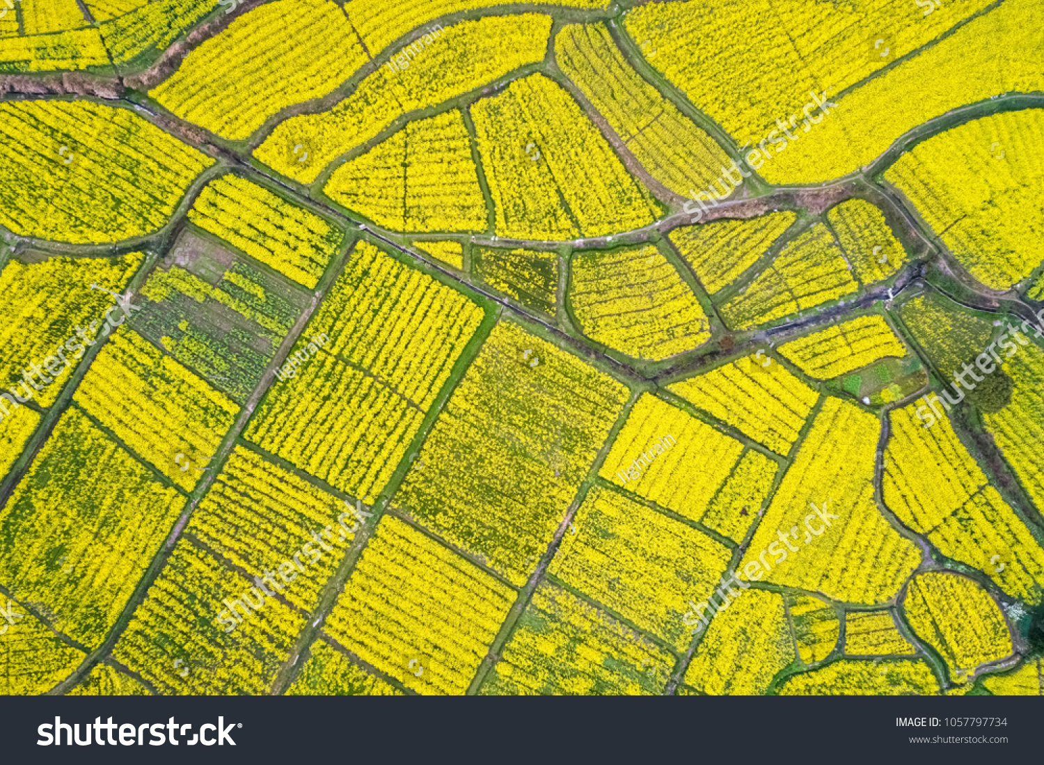 aerial view of rapeseed flower blooming in farmland ,earth color in spring #1057797734