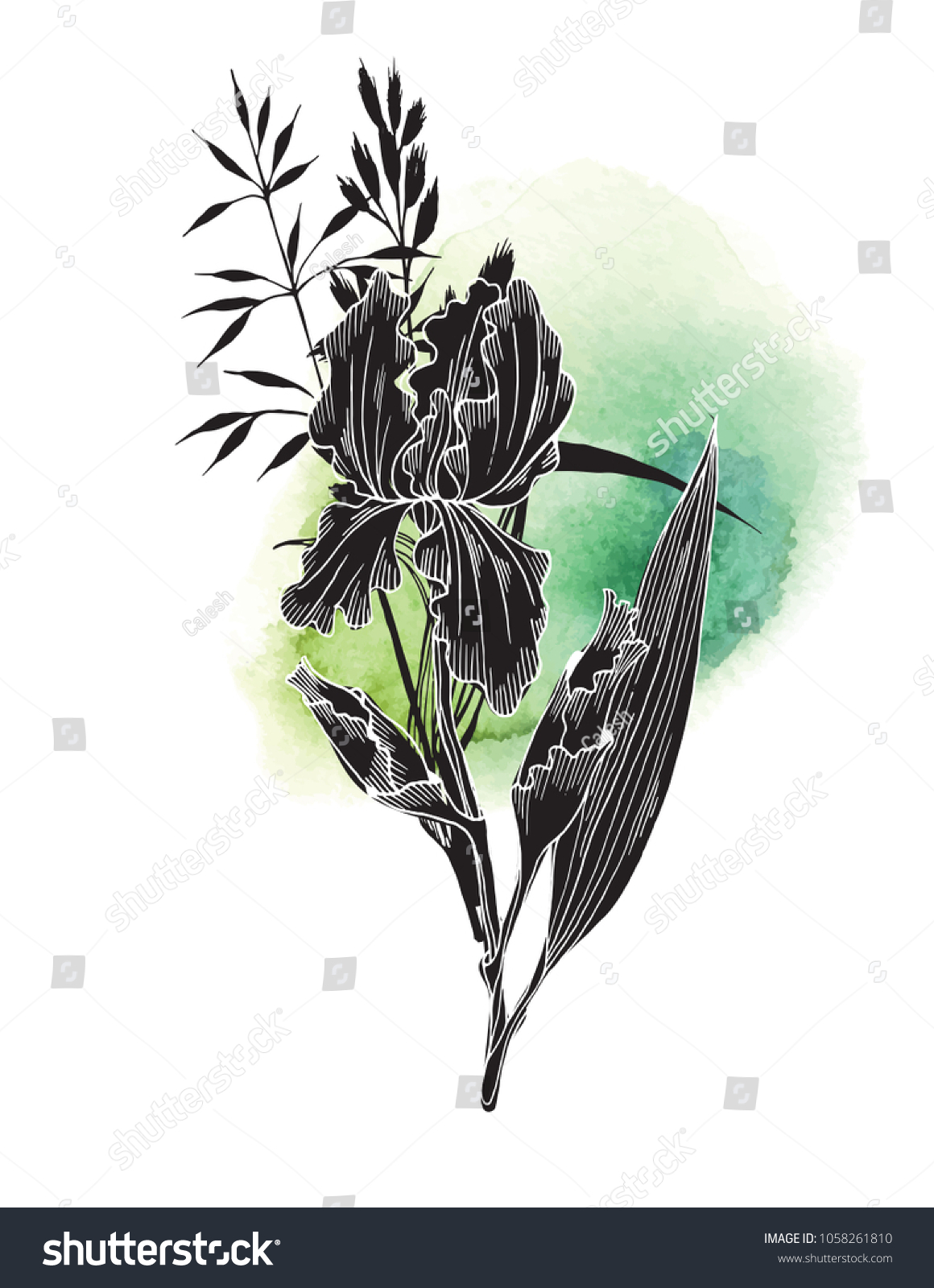 Black iris flower grass on green stock vector royalty free black iris flower with grass on green texture watercolor background hand drawn vector illustration for izmirmasajfo