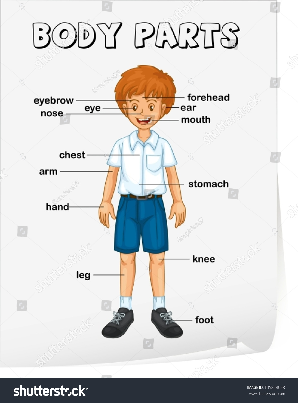 human body parts name with picture in english pdf download