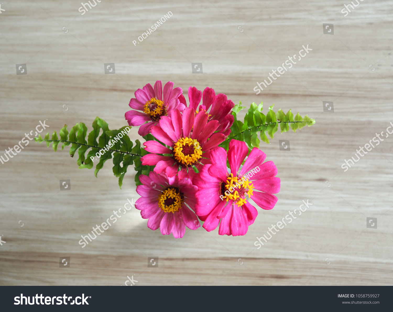 Zinnia Angustifolia Deep Pink Bouquet Green Stock Photo Edit Now 1058759927