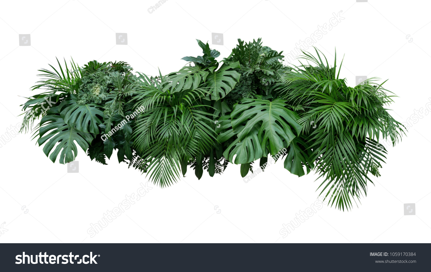 Tropical leaves foliage plant bush floral arrangement nature backdrop isolated on white background, clipping path included. #1059170384