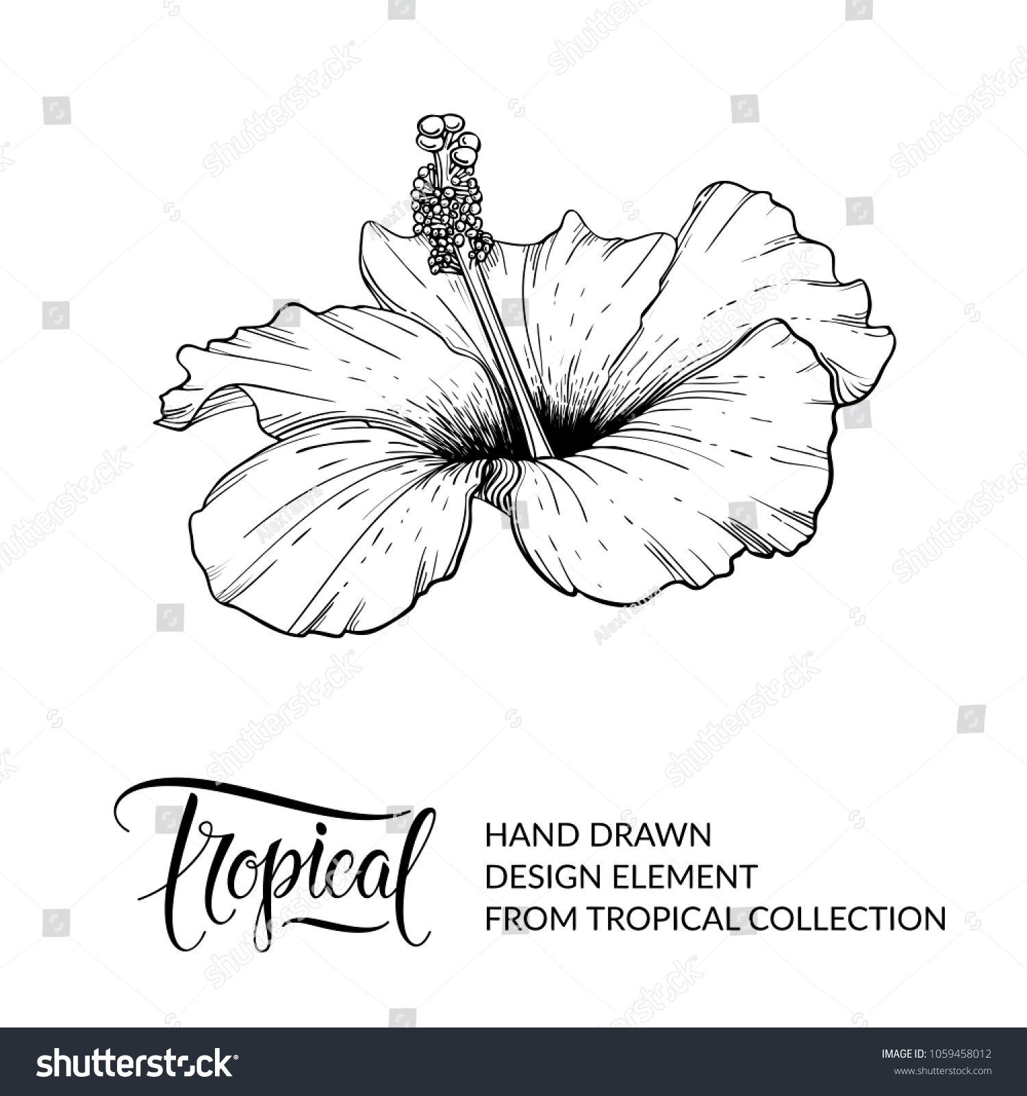 Hibiscus Tropical Flower Isolated Exotic Floral Stock Vector