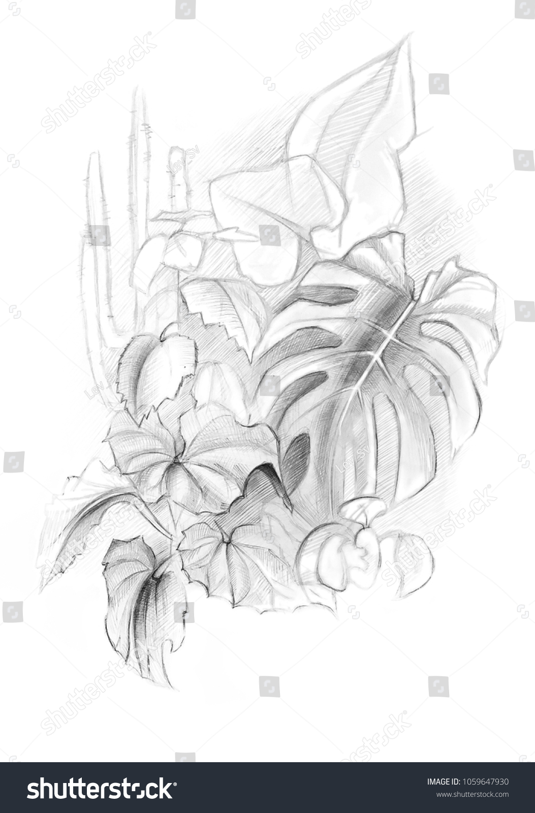 Sketch soft pencil drawing plants stock illustration 1059647930