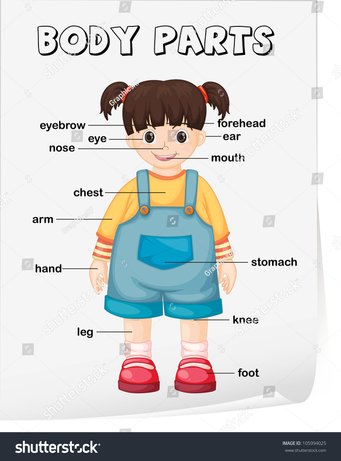 worksheet Parts Of The Body Worksheet royalty free vocabulary worksheet parts of the body 105994025 105994025
