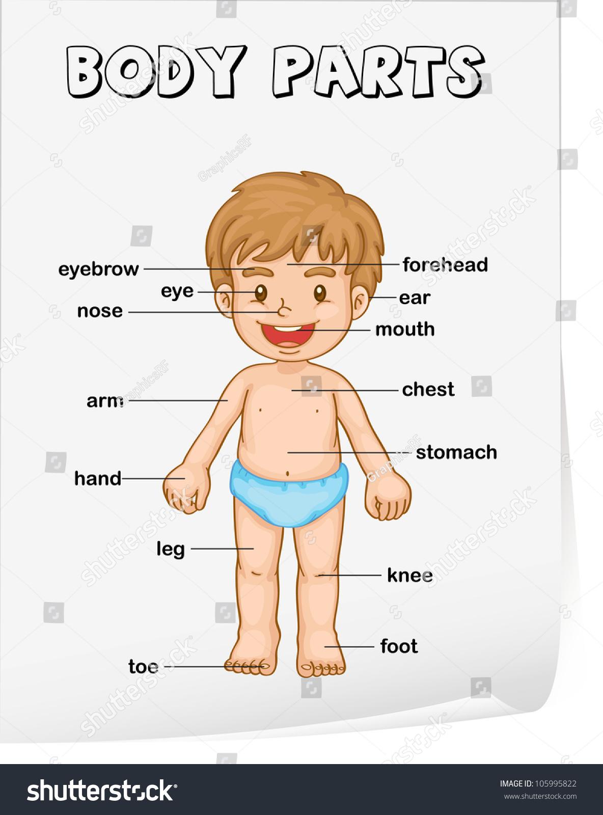 worksheet Parts Of The Body Worksheet royalty free vocabulary worksheet parts of the body 105995822 105995822