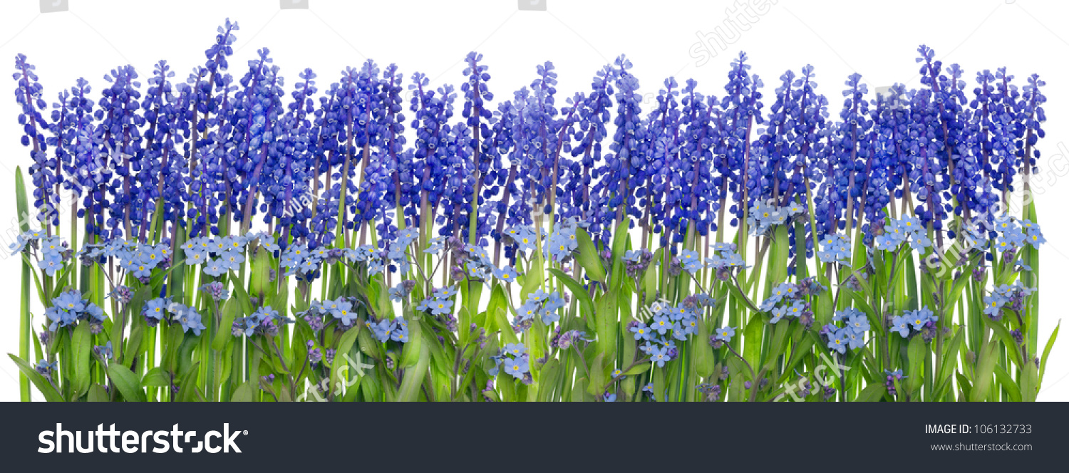 Big spring easter blue flowers grass stock photo edit now big spring easter blue flowers grass border collage isolated mightylinksfo