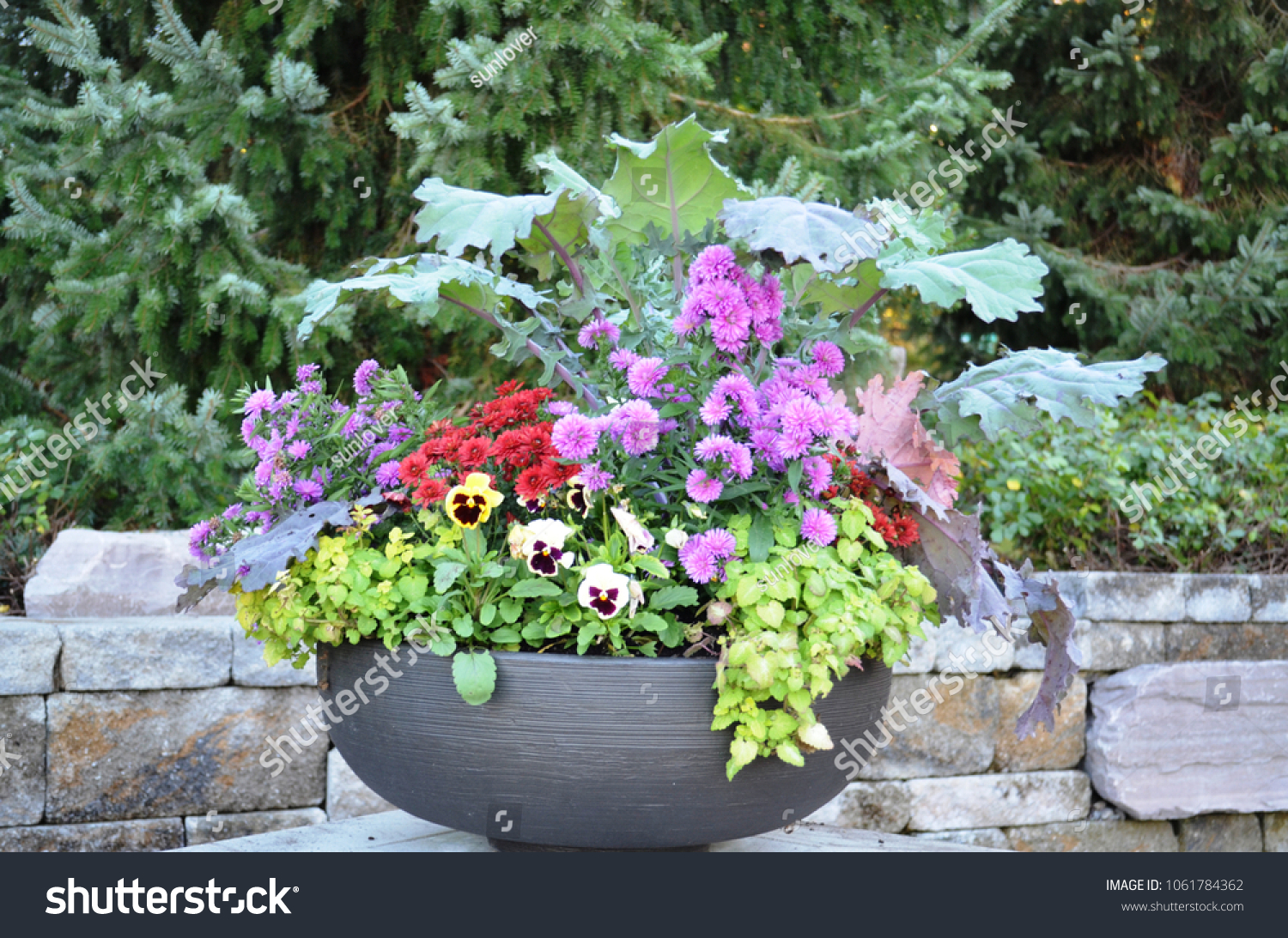 Pretty Potted Flowers Kettle Style Planter Stock Photo Edit Now
