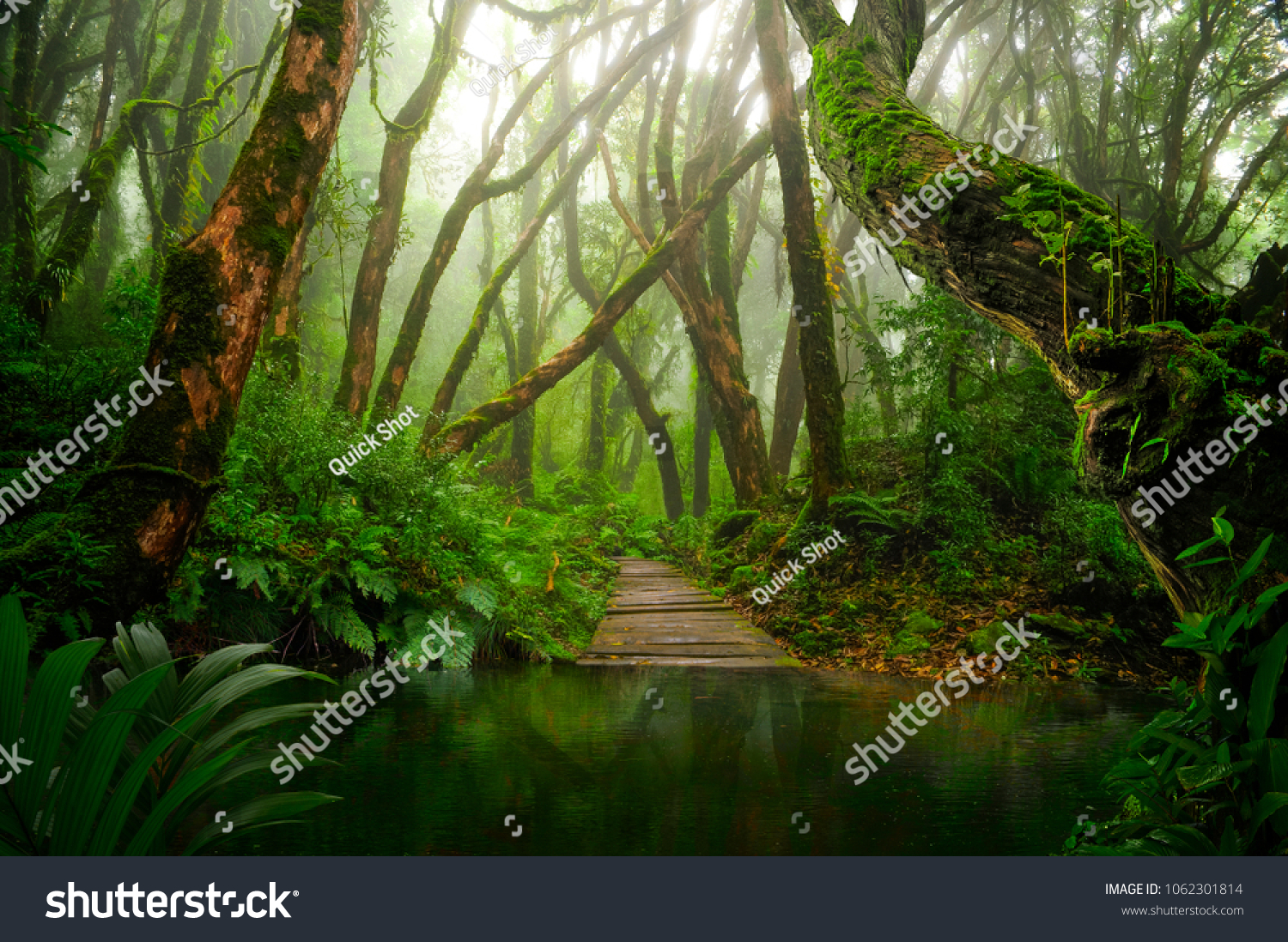 Asian tropical rainforest lake #1062301814