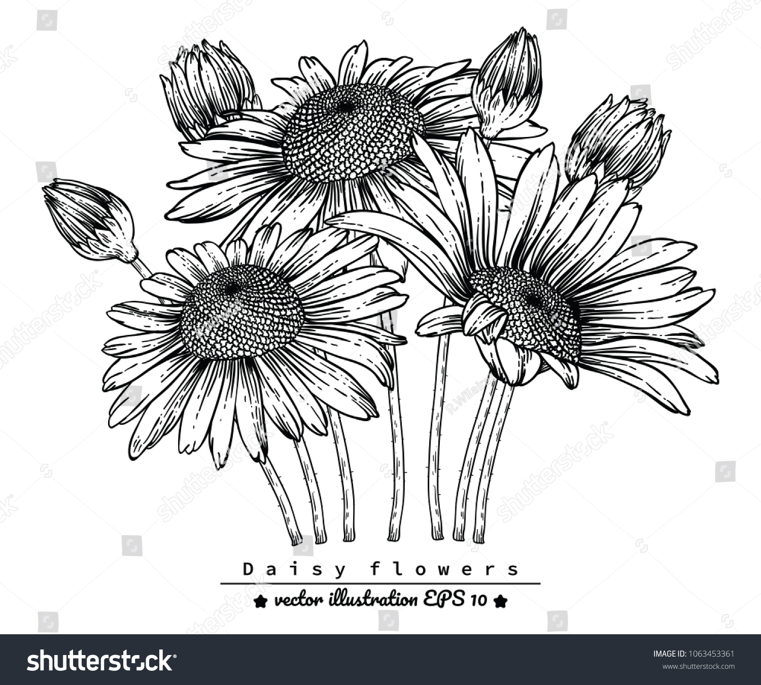 Flower Drawings Daisy Flowers By Hand Stock Vector Royalty Free