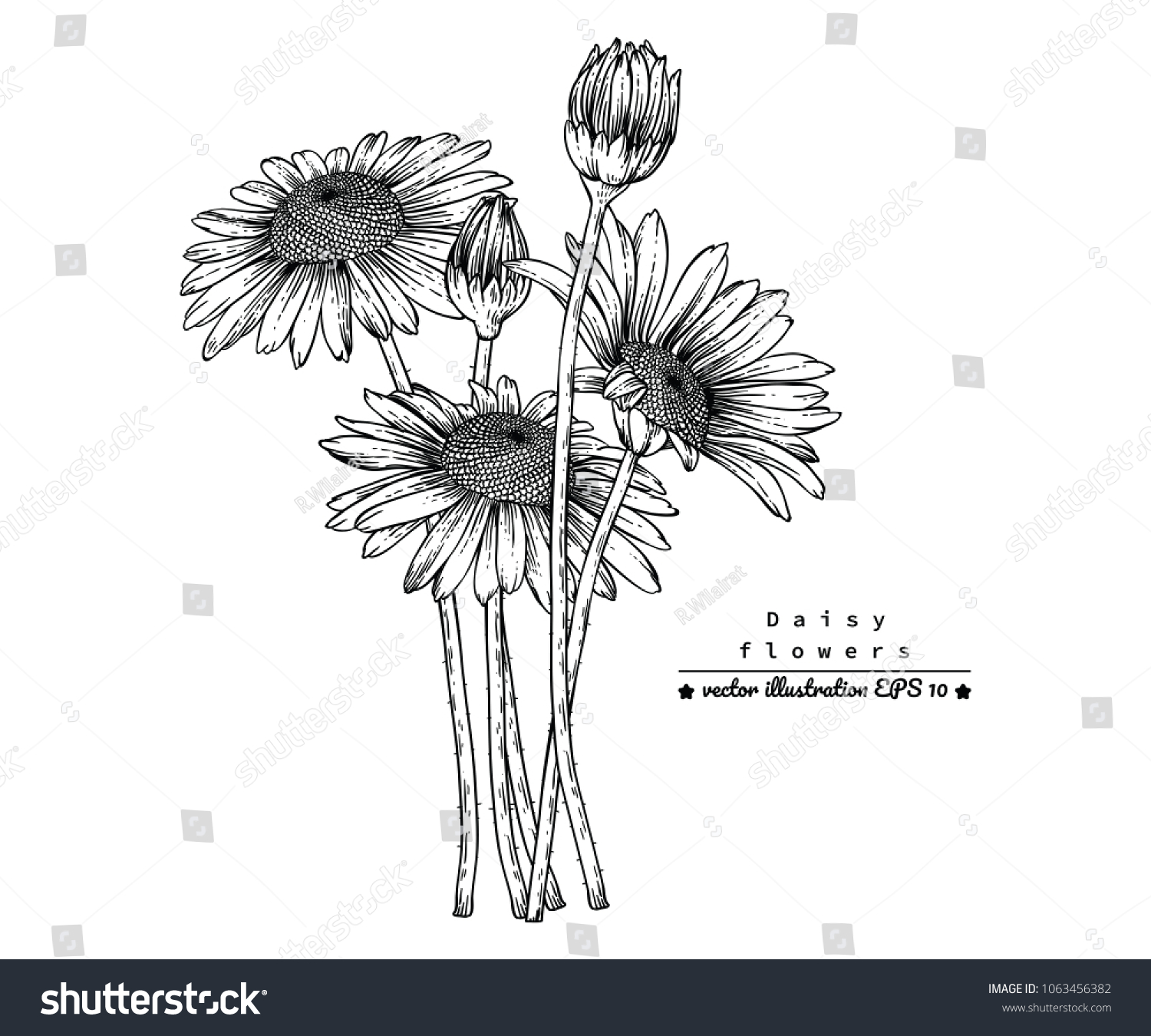 Flower drawings daisy flowers by hand stock vector royalty free flower drawings daisy flowers by hand drawn with line art on white backgrounds izmirmasajfo