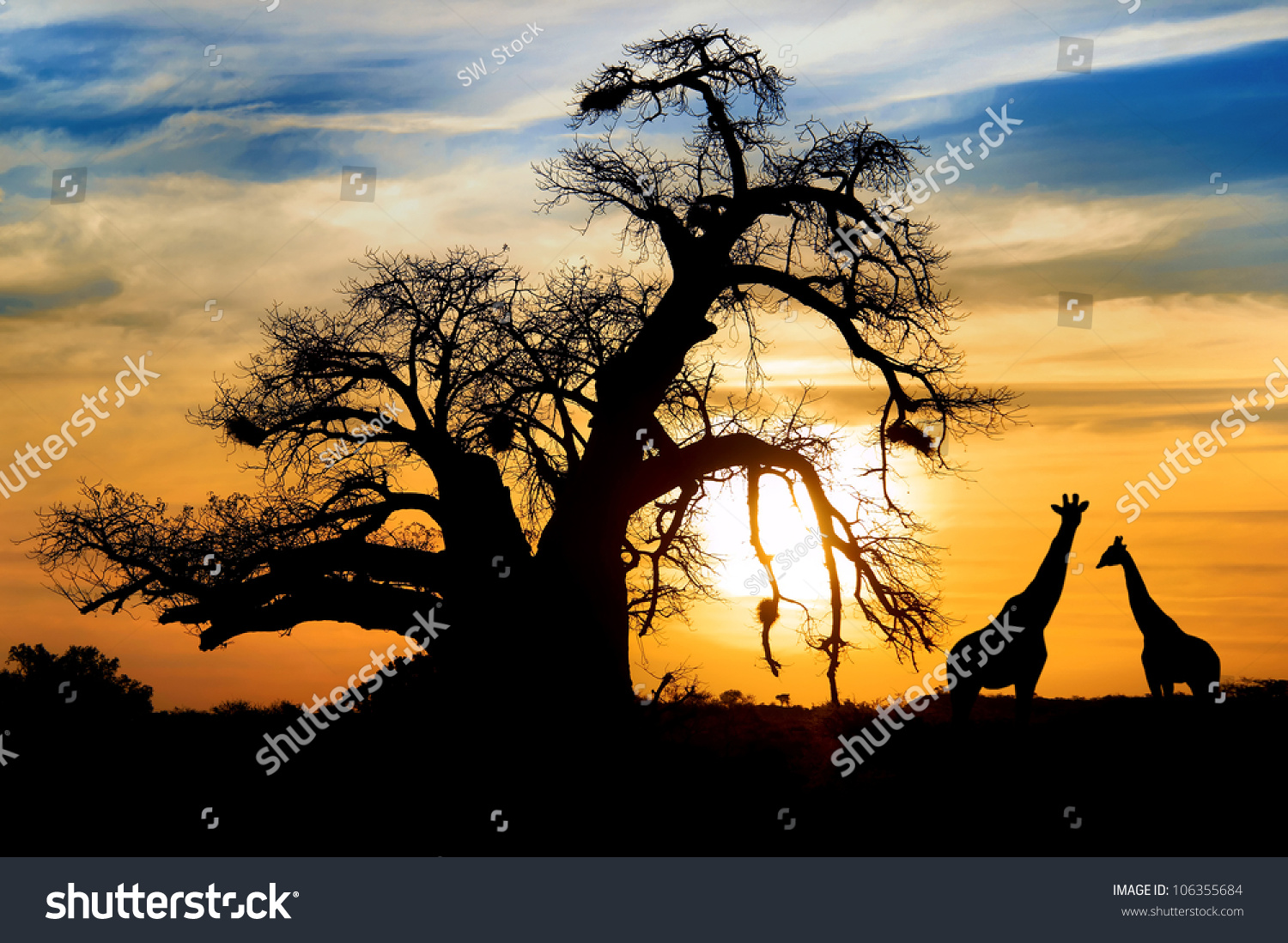 Spectacular sunset with baobab and giraffe on african savannah #106355684