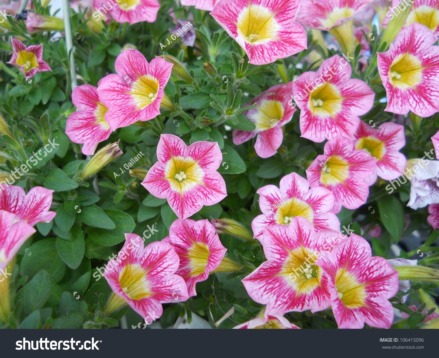Beauty Flowers Stock Photo Edit Now 106415096 Shutterstock