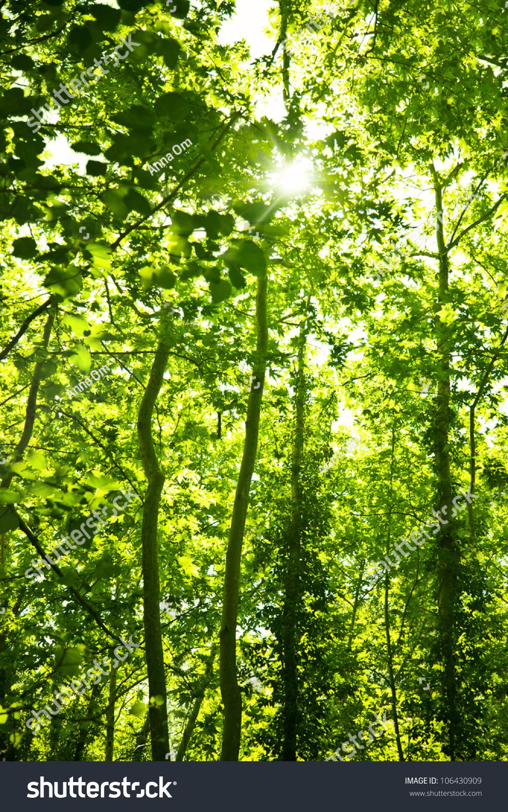 nature spring green tree - photo #31
