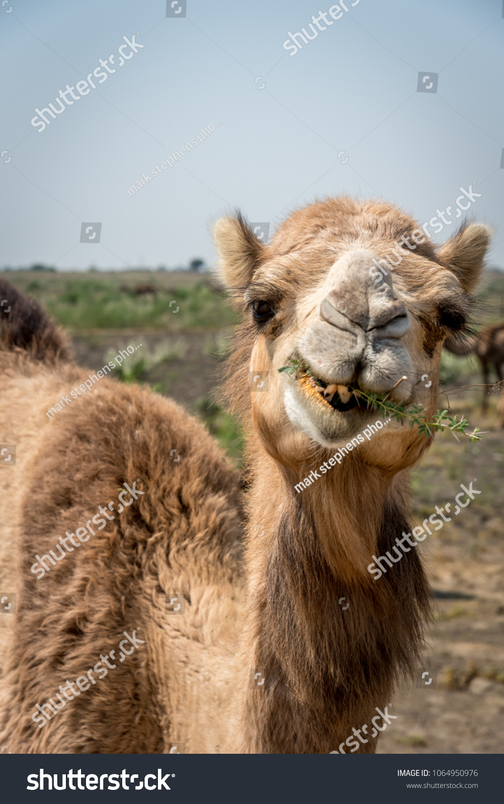 stock-photo-portrait-of-an-indian-dromed