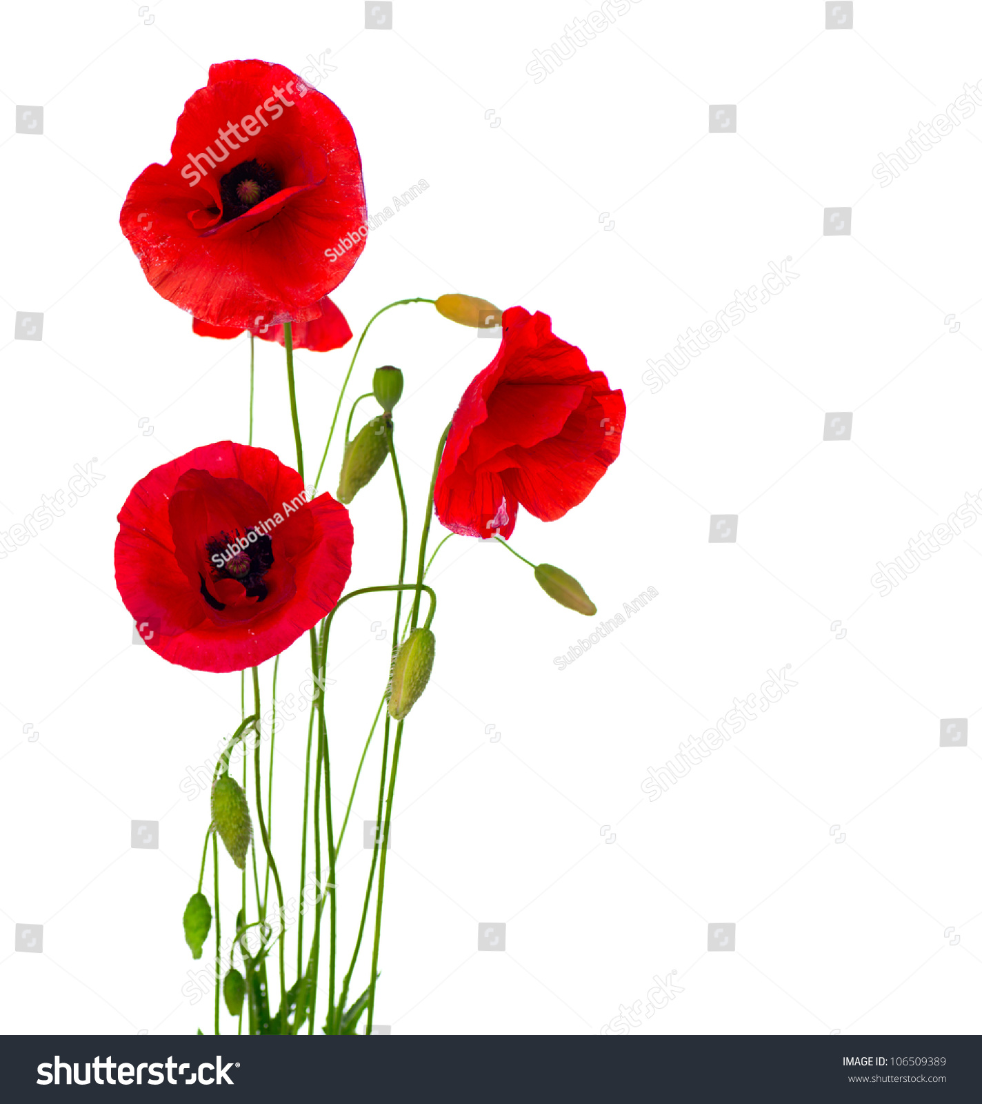 Red Poppy Flower Isolated On White Stock Photo Edit Now 106509389