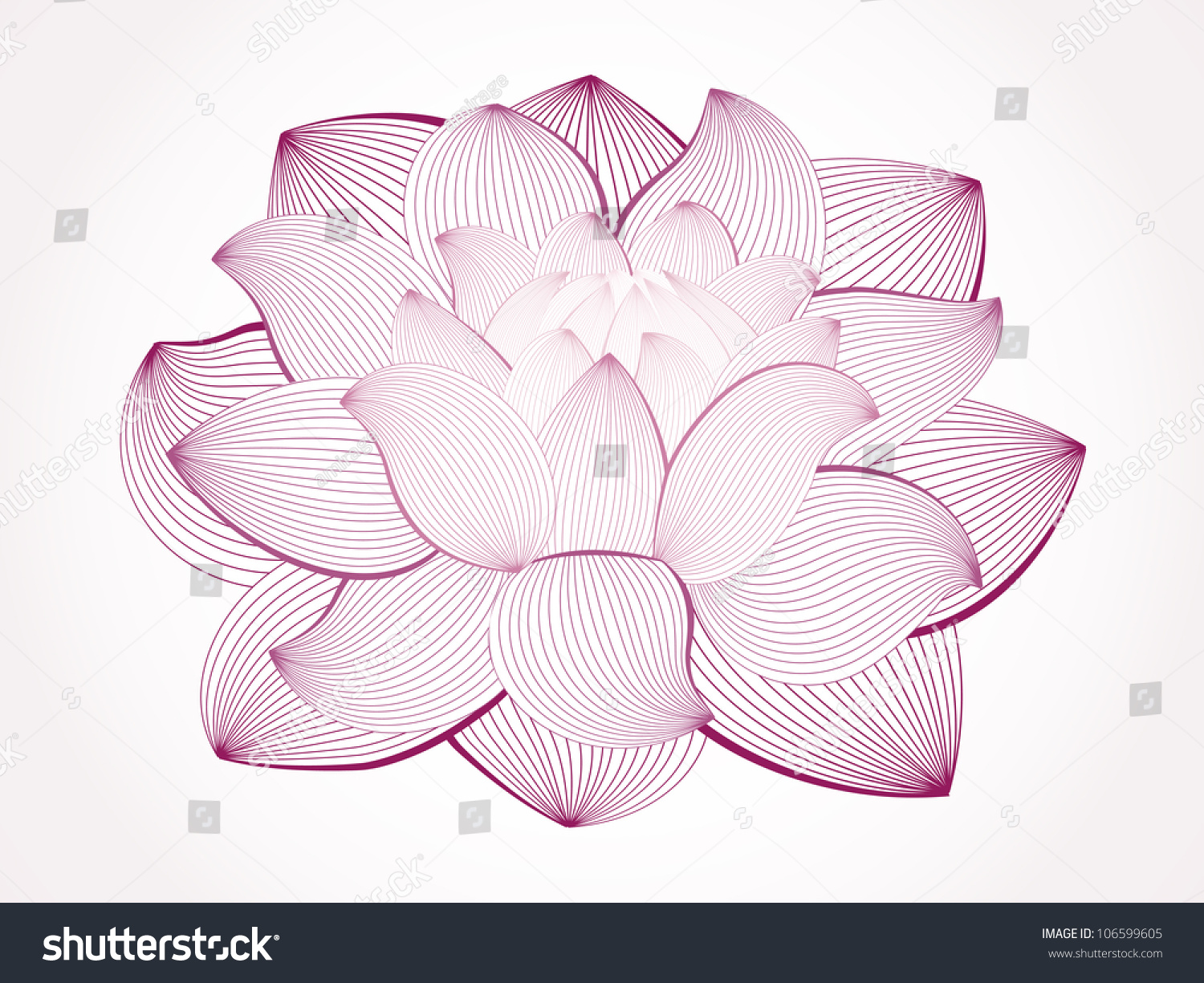 Vector Lotus Flower Isolated On White Stock Vector Royalty Free