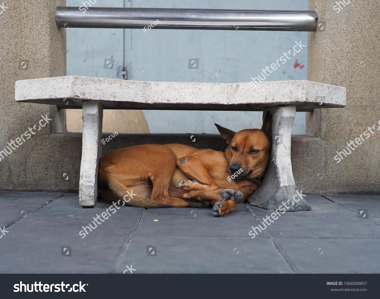 BANGKOK - APRIL 8, 2018: A dog finds refuge under a bench on April 8, 2018, in Thai capital Bangkok