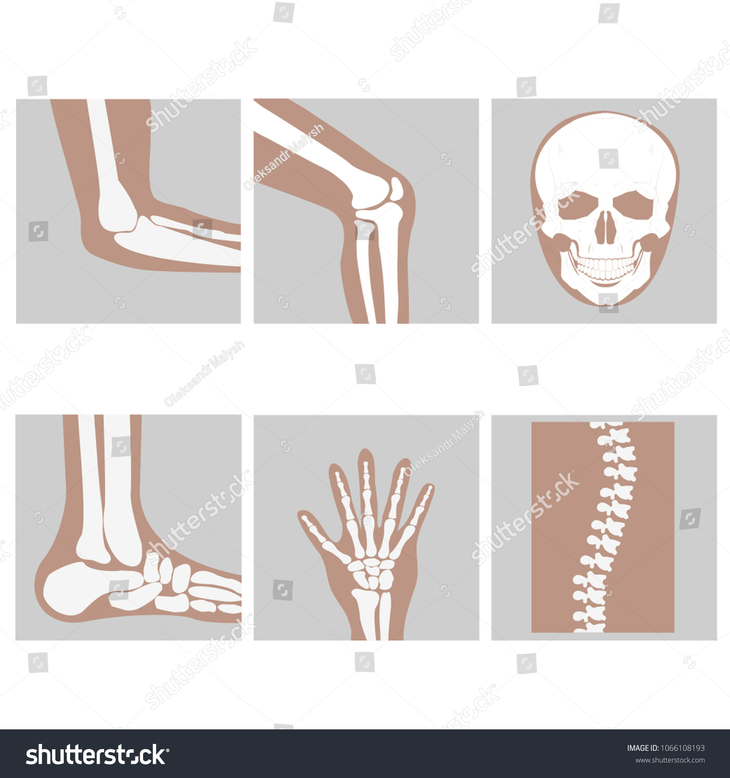 Human Joints Knee Elbow Ankle Wrist Stock Vector Royalty Free