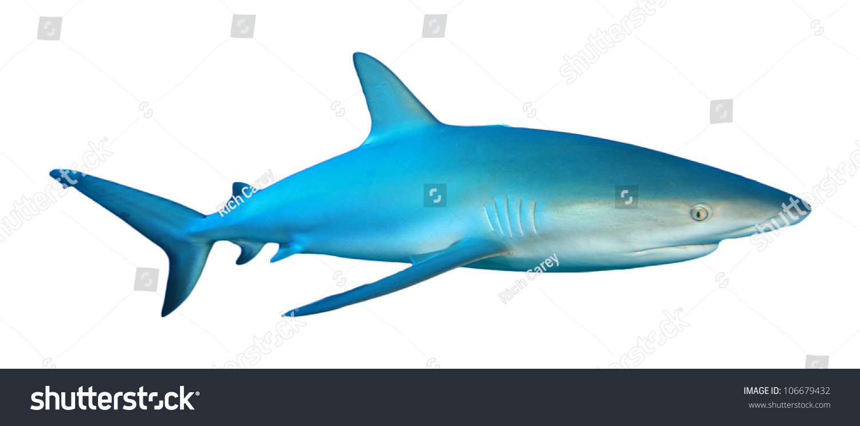 Акула Каталог
