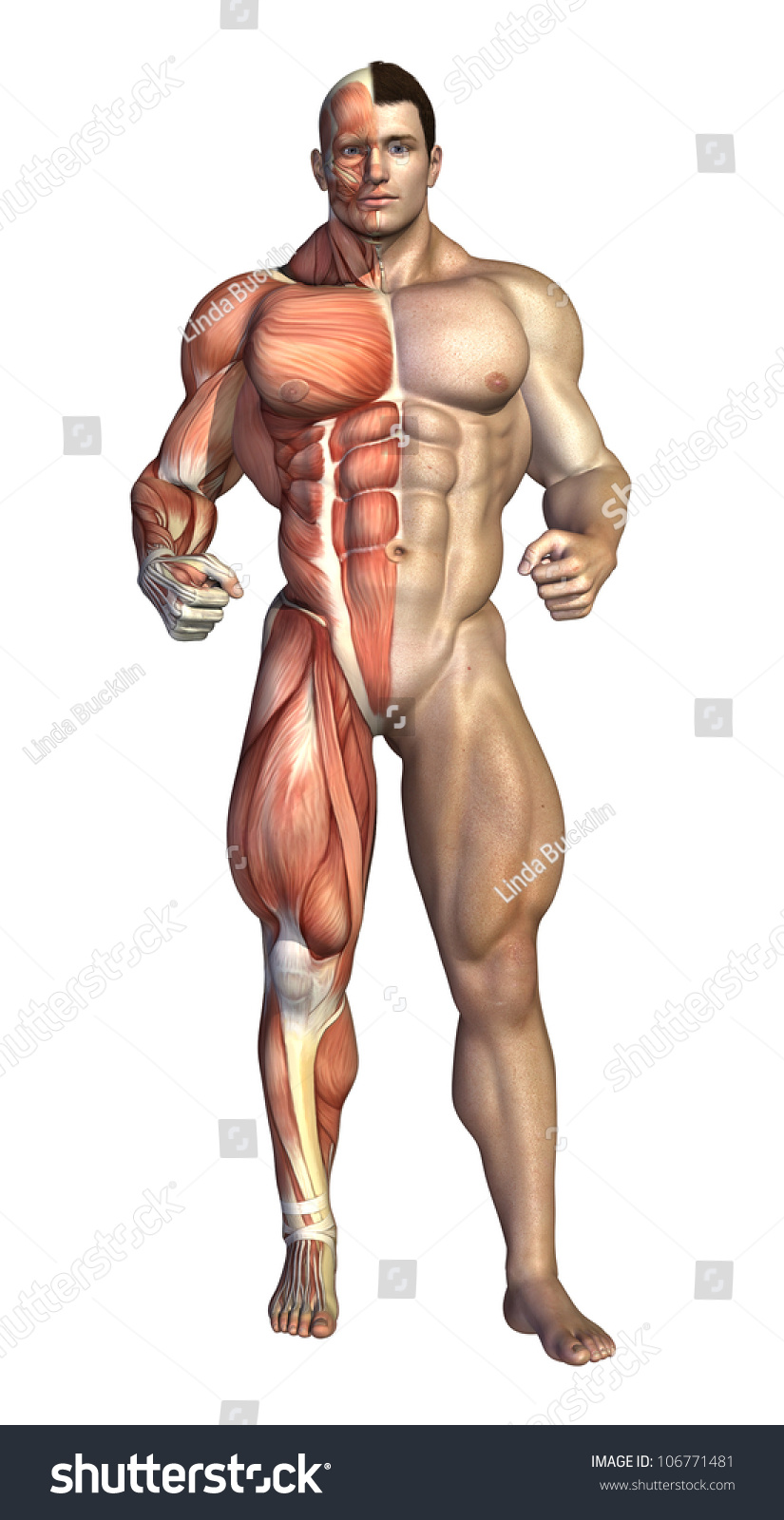 very muscular man shown underlying muscle stock illustration, Muscles