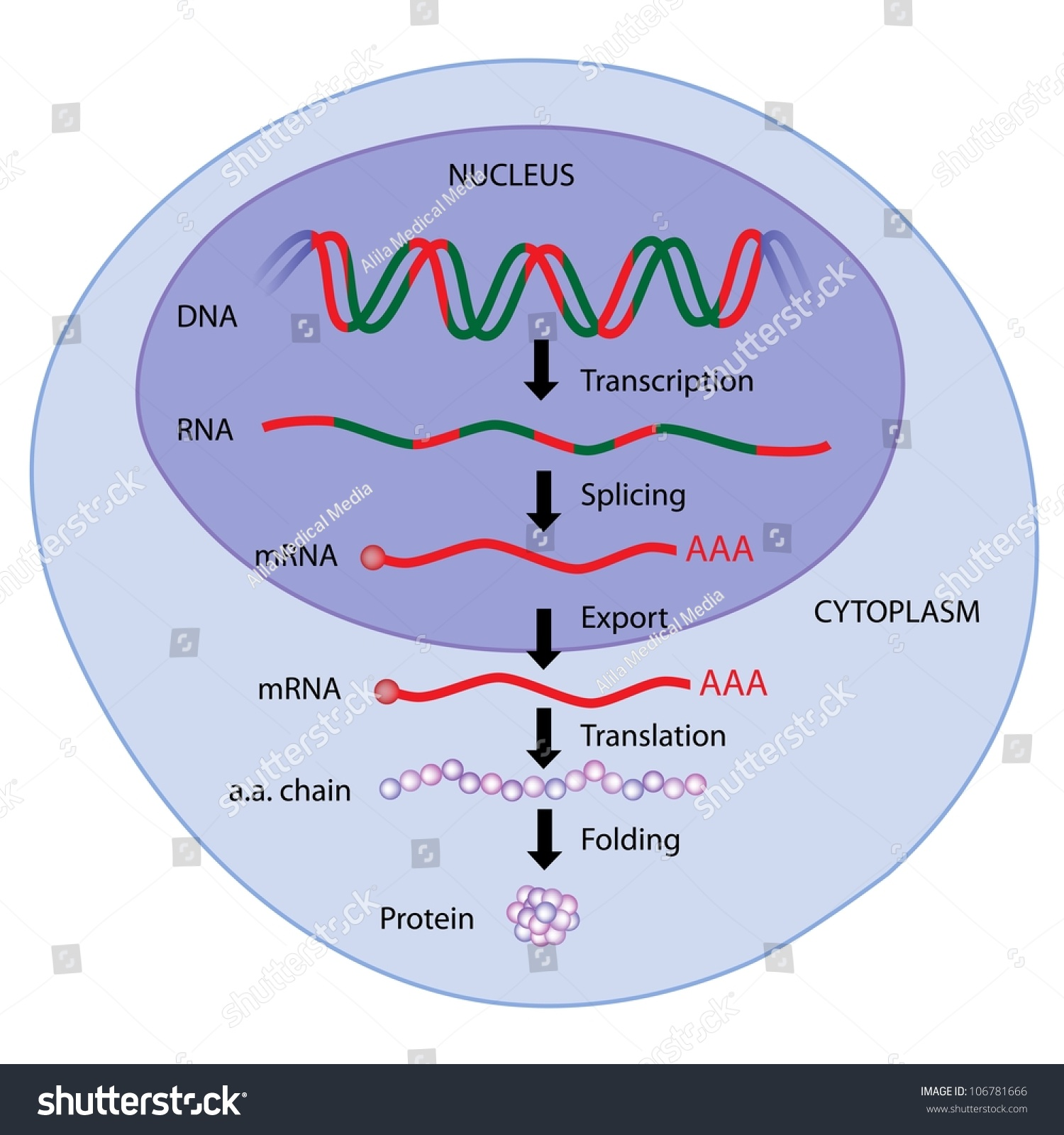 an analysis of the expression of a gene in protein synthesis Optimize your research and save valuable time with high quality gene synthesis and molecular biology services genotyping & gene expression oligo analysis tool.