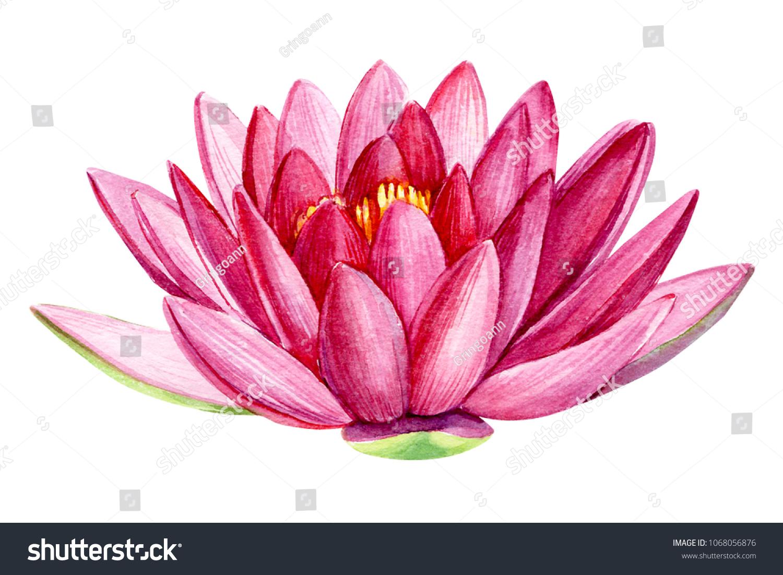 Pink Lotus Flower Watercolor Illustration Hand Stock Illustration