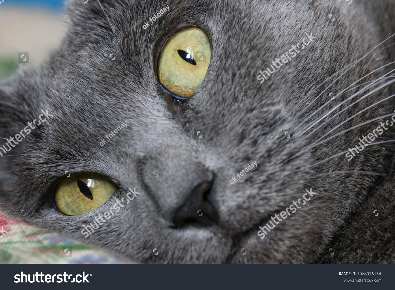 stock-photo-gray-cat-s-big-eyes-10689761