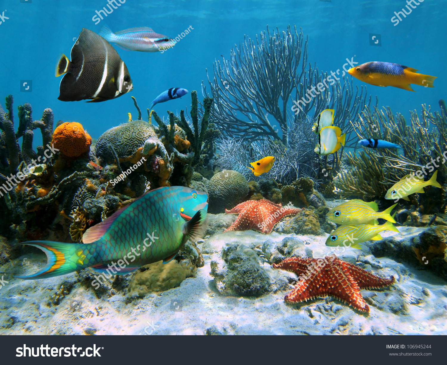Coral garden starfish colorful tropical fish stock photo for Colorful tropical fish