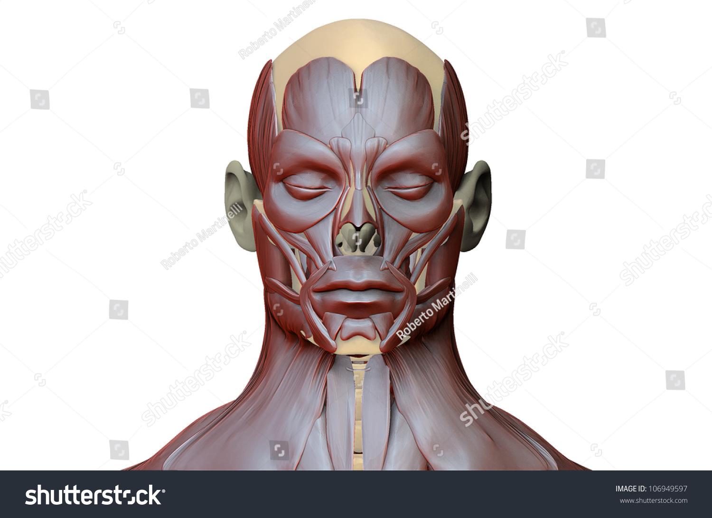 High Resolution Illustration About Human Anatomy Stock Illustration