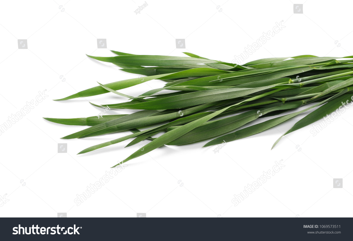 Green young wheat isolated on white background #1069573511