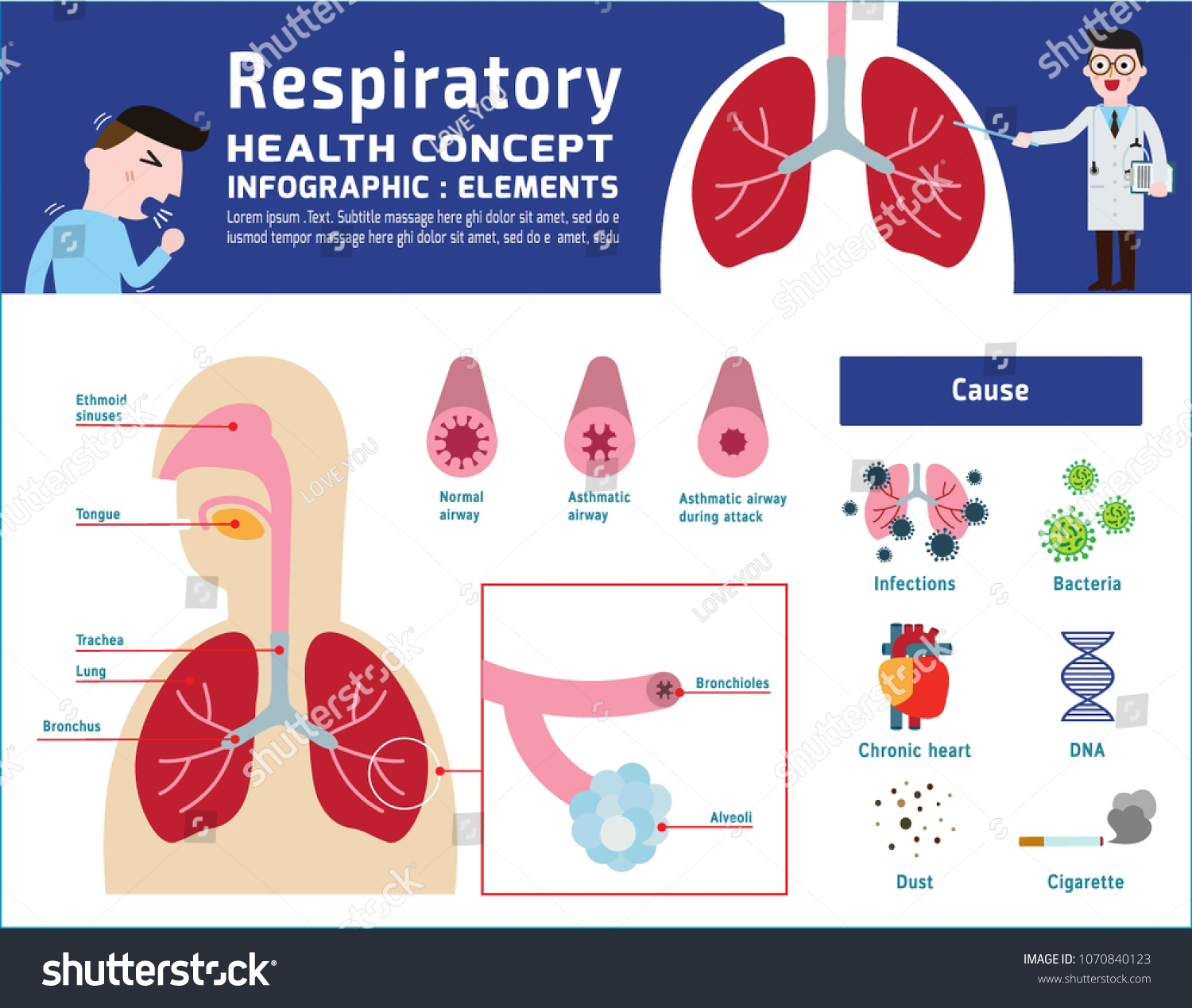 Respiratory System Human Illustration About Anatomy Stock Vector ...