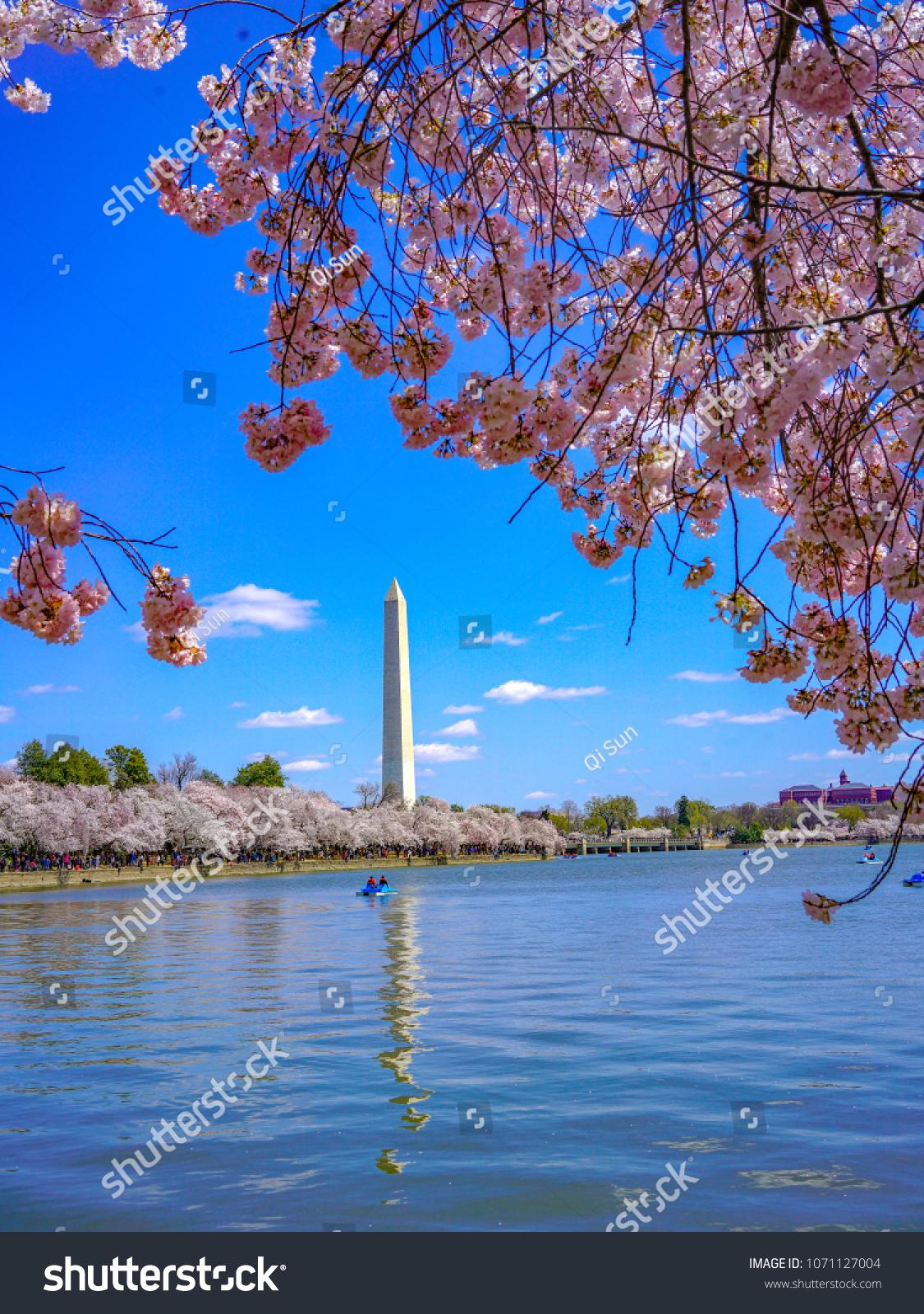 Due Cold Weather Sakura Washington Dc Stock Photo (Edit Now