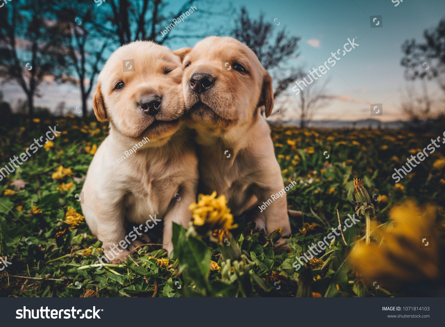 Super Cute Puppies Field Flowers Stock Photo Edit Now 1071814103