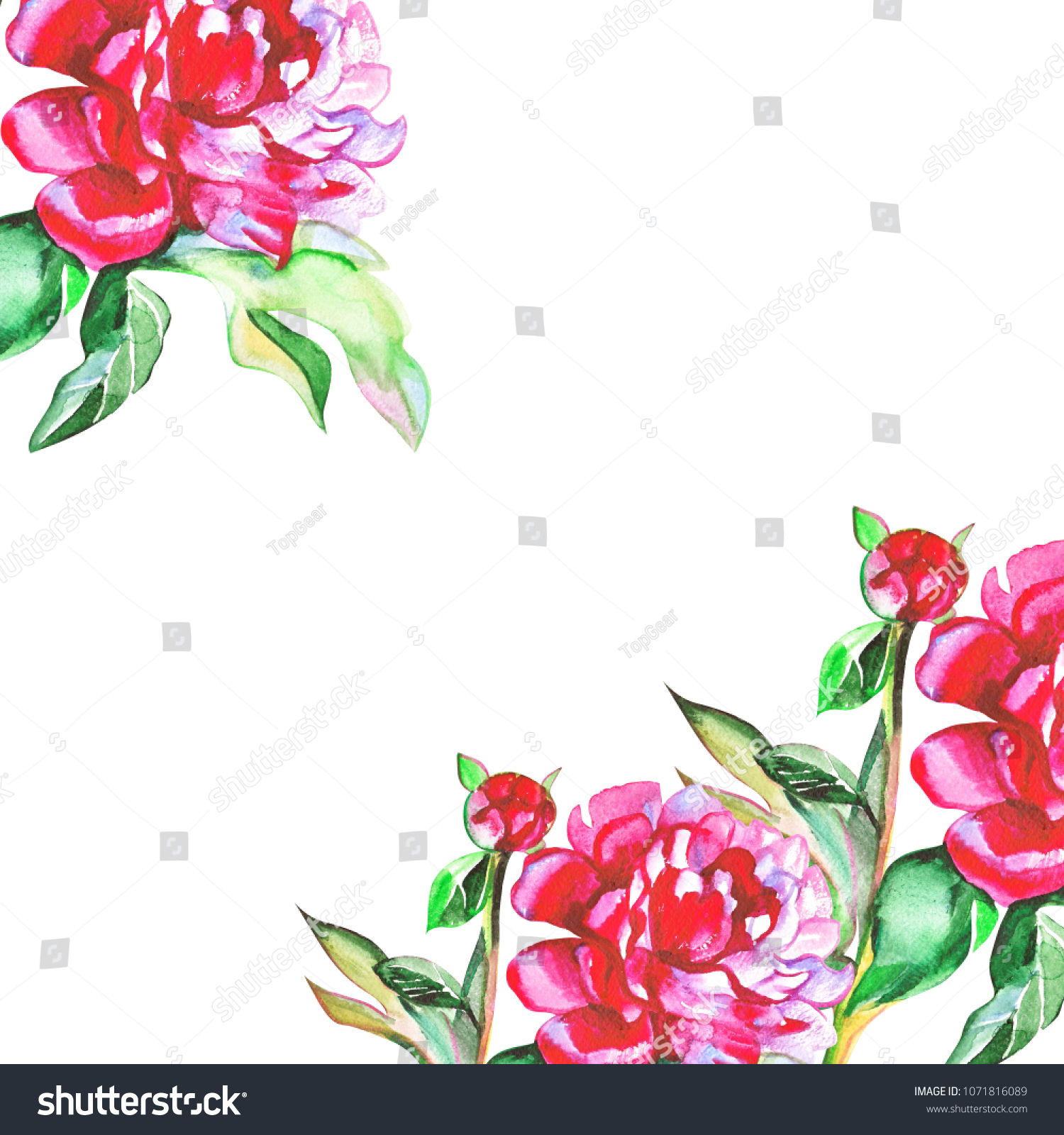 Royalty Free Stock Illustration Of Flower Red Pink Peonies Flowers