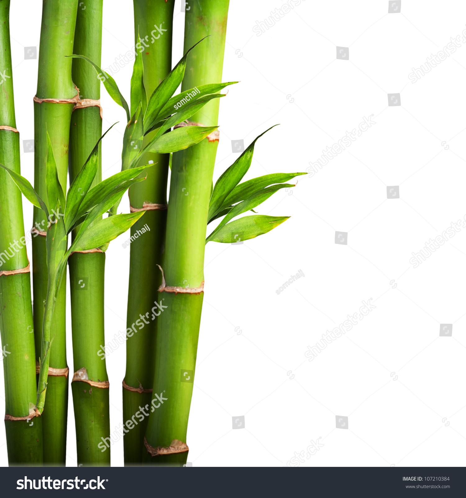 Fresh Bamboo Isolated On White Background Stock Photo